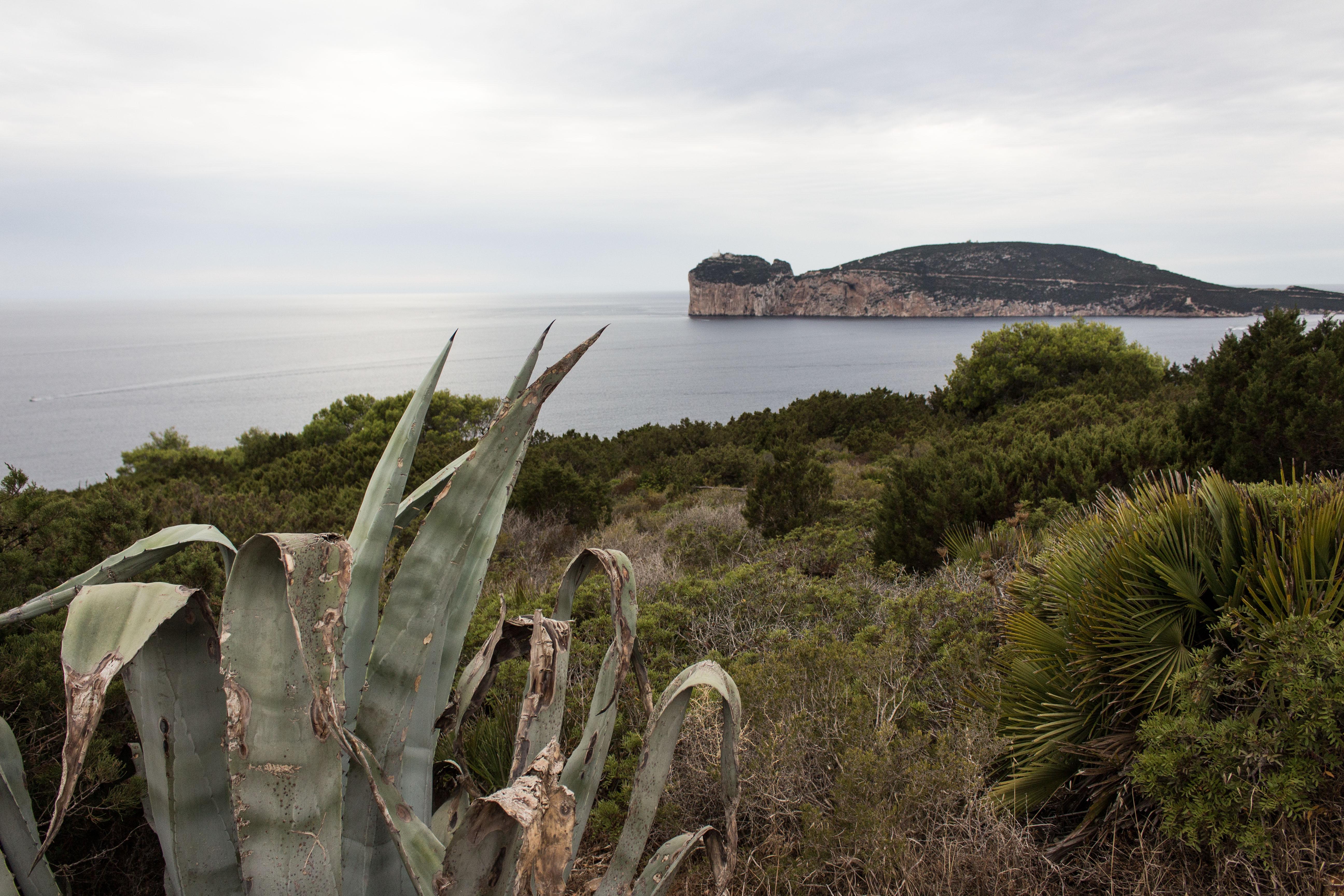 Punta Giglio – Post diffamatori contro il Parco di Porto Conte, una ditta di Udine li ha certificati