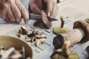 Raccolta funghi, attivo l'Ispettorato micologico della ASSL Sassari