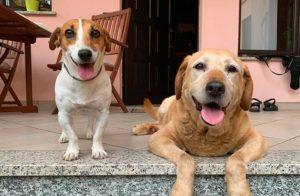 Contributi a favore delle associazioni che si occupano del benessere animale, avviso pubblico