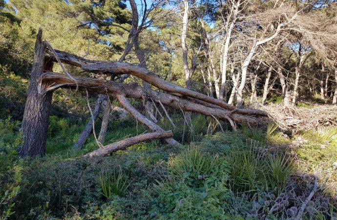 WWF, LIPU e GRIG dossier Punta Giglio: il bosco abbandonato
