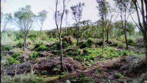 Il GrIG si costituisce parte civile nel giudizio sui tagli nel bosco di Arenas