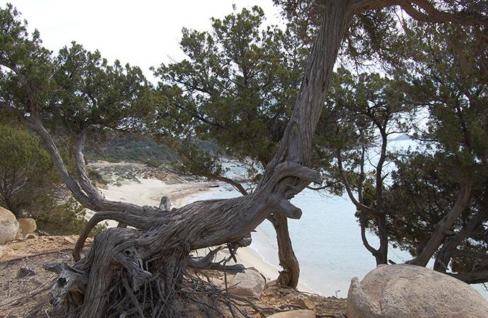 """""""Tentativi speculativi (tanto per cambiare) ai danni delle terre collettive in Sardegna"""""""
