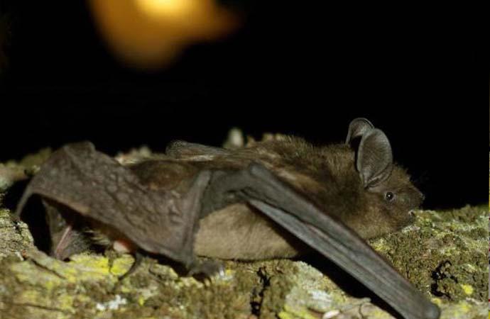 Parco di Porto Conte a tutela dei Pipistrelli – Attività di informazione, sensibilizzazione ed educazione ambientale, Giovedì il progetto BATS