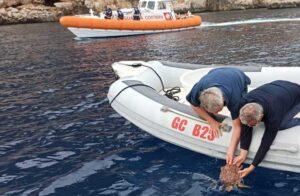"""Guardia Costiera e  Amp Capo Caccia-Isola Piana rilasciano un esemplare di """"Caretta Caretta"""""""