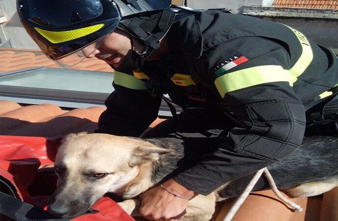 I VVF soccorono un cane, era sul tetto di una palazzina di quattro piani